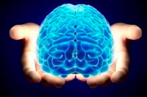 ALPA - El coeficiente intelectual depende del grosor de la corteza cerebral - ALPA - Asociación de Logopedas del Principado de Asturias